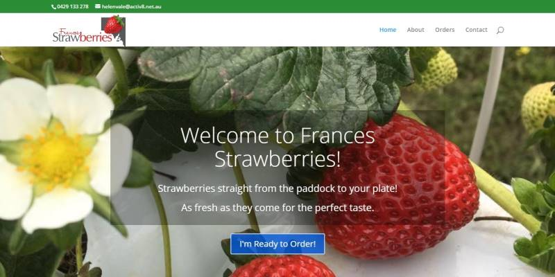 frances-strawberries-Gusto-Marketing