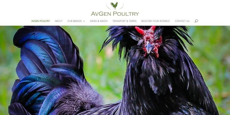 Avgen-Poultry